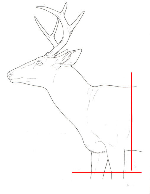 deercapediagramtext