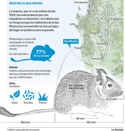 LT raton de mocha